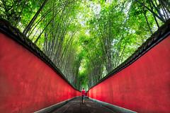 Walking in Chengdu (Trey Ratcliff) Tags: chengdu china stuckincustomscom treyratcliff hdr hdrtutorial hdrphotography hdrphoto aurorahdr bamboo forest wall red green glow travel
