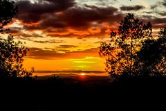 Atardecer radiante (ameliapardo) Tags: tardecer puestasdesol sol cielo rojo nubes arboles contraluz fujixt2 fujinon1855 sevilla