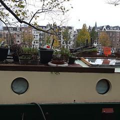 20181107_44 Amsterdam (NL) Mini garden on ship