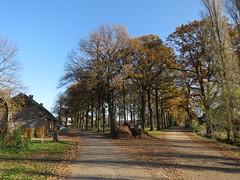 IMG_8973 (Momo1435) Tags: eindhoven brabant waalre herfst herfstkleuren netherlands autumn fall colors