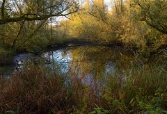 Fall season 4 (rob kraay) Tags: autumn pond branches robkraay tree mud reed overgrown waterfront reflection trees leaves water grass sky river lake