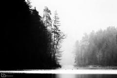 fog on lake (alamond) Tags: fog mist lake forest wood winter morning bw balckandwhite monochromatic canon 7d markii mkii llens ef 70300 f456 l is usm alamond brane zalar