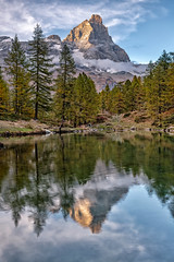 The Matterhorn (Cervinia) at sunset reflected in Lake Blue, just outside the village of Cervinia in Valtournenche, Italy (diana_robinson) Tags: matterhorn cervinia italianside sunset reflection duck lakeblue lagoblu valtournenche italy breuilcervinia valled'aosta northwesternitaly snowcappedmountains autumn leaves fall pyramidshaped lacbleu tranquilscene lake landscape mountain nikonflickraward