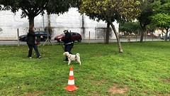 IMG_8485 (Doggy Puppins) Tags: educación canina adiestramiento canino perro dog