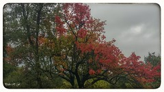 Vivos colores (pedroramfra91) Tags: otoño autumn paisaje landscape exteriores outdoors arboles trees colores colors naturaleza nature