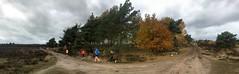 haarlerbergloop 10 km (56)