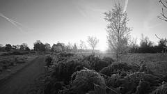 614A2053xa_00001_bewerkt-1 (frans.oost) Tags: dawn sunrise monochrome road field tree landscape