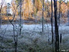 Tohloppi (PeepeT) Tags: metsä lampi bond syksy autumn marraskuu november tampere tohloppi luontokuvaus naturephotograpy