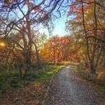Autumnal Trail thumbnail
