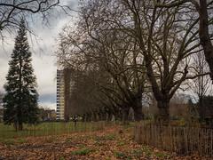 London Fields (davepickettphotographer) Tags: london fields uk east end londonfields england winter autumn leaves landscape cityoflondon eastend eastern