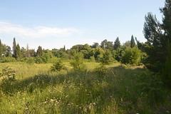Livada i drveta (134FJAKA_1159)