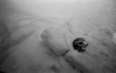Past can be buried but not forever (Sonofsono) Tags: film optar black bw white winter skull snow graflex speedgraphic fomapan