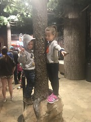 "2018-03-24-to-30-minnesotta-to-see-adam-and-sara-curl-with-family-at-hotel-scavendar-hunt_44036514235_o • <a style=""font-size:0.8em;"" href=""http://www.flickr.com/photos/109120354@N07/45494711414/"" target=""_blank"">View on Flickr</a>"