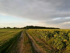 Одолев более чем 40 км асфальтовых дорог, к вечеру я поехал исключительно грунтовками. Ветер в данных местах к вечеру стихает и все вокруг погружается в изумительную тишину.
