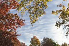 Autumn - Early AM (Modkuse) Tags: nature natural sky clouds autumn fall fallcolors fujifilm fujifilmxt2 xt2 xf1855mmf284rlmois fujinon fujinonxf1855mmf284rlmois art photoart fineartphotography fineart vividcolor trees