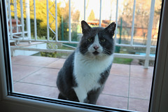 30/118. My Precious (hattyu) Tags: 2018 118picturesin2018 cat macska