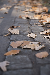 fallen autumn leaves on rock pavement (Cat Girl 007) Tags: abstract autumn background closeup cover dry environment foliage forest ground landscape leaf leaves natural nature november october outdoor park pavement plant rocks season seasonal stones vertical