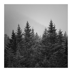 Snow in Autumn (bprice0715) Tags: canon canoneos5dmarkiii canon5dmarkiii landscape landscapephotography nature naturephotography blackandwhite bw blackwhite monochrome mono moody mist snow trees squarecrop newhampshire whitemountains contrast