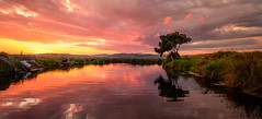 Sometimes beauty is only pond deep (ajecaldwell11) Tags: xe3 sunset ankh water fujifilm light sun hawkesbay newzealand tree napier yellow sky flowers orange caldwell dusk clouds