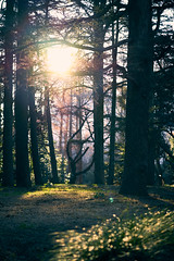 Sunny spot in the forest (KaeriRin) Tags: japan spring winter january sun nature green forest tree flowers shinjuku gyoen park sony alpha sony7m2 7mii zeiss 55mm18