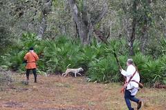 EEF_7637 (efusco) Tags: boar medieval spear brambleschoolearteofthehunt bramble schoole military arts academy florida ferel hog pig