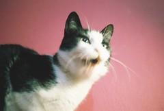 my wild cat #35mm (beldadağ) Tags: 35mm