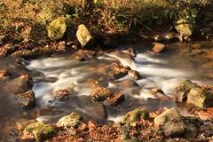 Parque Natural Ucieda (Txaro Franco) Tags: ucieda parque natural cantabria arroyo bosque otoño udazkena ura agua water eau