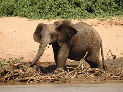 Baby Mudbath by Nina (alpenglowtravelers) Tags: african safari kenya samburu