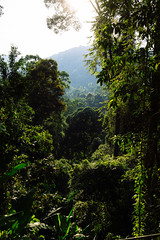 Thick jungle, Ko Phangan (Thailand) (Steffen Kamprath) Tags: asia asie asien carlzeisssonnarte1824za countryside crop day detail documentary emount fragment island jungle kophangan kohphangan landscape nature nopeople outside primelens rural sel24f18z sonya6000 sunny tailandia thailand thaïlande travel travelphotography tree vacation zeiss natural ประเทศไทย เกาะพะงัน