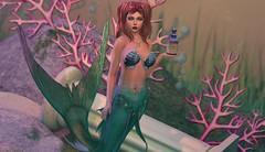 The Mermaid Tail (Ashley Densu) Tags: mermaid fantasy secondlife goddess sl slphotography maitreya catwa