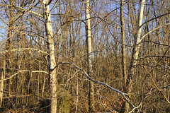 Winter Morning Southern Exposure (Modkuse) Tags: velvia fujivelvia fujichromevelvia fujifilmxt2velvia fujifilmxt2velviasimulation nature natural landscape trees art artphotography photoart fineartphotography fineart fujifilm fujifilmxt2 xt2 xf1024mmf4rois fujinon fujinonxf1024mmf4rois sunny bright winter wintermorning