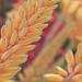 A warm fuzzy (N.Clark) Tags: floralabstract warmfuzzies warmtones flowers floral arizonaflowers linecomposition designsinnature diagonallines
