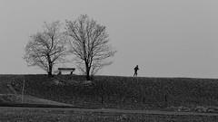 Laufen (flori schilcher) Tags: schilcher nebel laufen baum bank absoluteblackandwhite