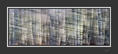 Papyrus (After-the-Rain) Tags: birch woodland trees icm intentionalcameramovement ©joanthirlaway cumbria warwickmoorwood fujixt1 january2019 blur blurring colours light