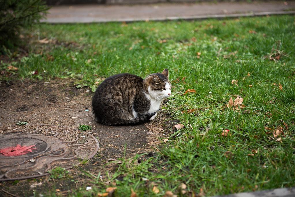 фото: Котское