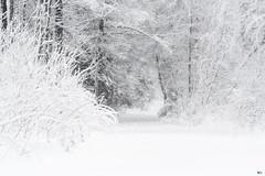 ''Sentier de neige!'' (pascaleforest) Tags: paysage landscape passion nature nikon wild wildlife forest forêt snow neige sentier automne blanc white