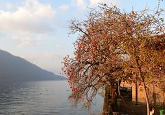 Lago d'Iseo, Italy, December 2018 089 (tango-) Tags: iseo lagoiseo iseolake lagodiseo lombardia italia italien italie italy