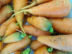 Mylor. Home grown carrots for Christmas. (denisbin) Tags: mylor parsnips carrots homegrown