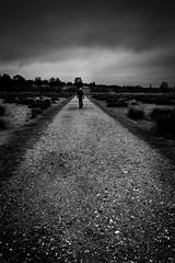 Take a walk on the wild side (paullangton) Tags: mono monochrome bw hertford hertfordshire blackandwhite contrast clouds sky trees outside park weather rain canon walk winter skancheli