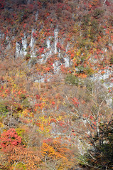 Nikkō (日光市) Town | Tochigi, Japan (Ping Timeout) Tags: nikkō 日光市 town city tochigi prefecture japan nikko north west season visit travel autumn fall outdoor 栃木県 unesco world heritage site national park cliff rough terrain rock colour orange red green yellow nippon holiday 東京 日本 october 2018 vacation explore nature scene tree vegetation changing change forest mount mountain