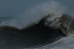 IMG_0637 (monika.carrie) Tags: monikacarrie wildlife scotland aberdeen waves