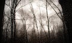 screen see (bidutashjian) Tags: trees woods forest screen raindrops rain mist misty fog foggy sky cloudy nikon d3500 bidutashjian