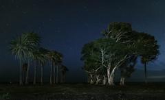 Noches Estrelladas (RosiLeo) Tags: rosileo nocturnas grancanaria