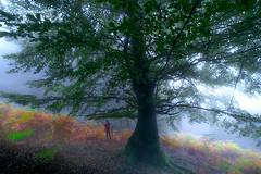 ALTUBE 10 (juan luis olaeta) Tags: paisajes landscape natura fog laiñoa nieblas forest bosque basoa hayedo photoshop lightroom altube