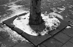 Hot shade (Arne Kuilman) Tags: olympusom40 apx400 iso400 id11 homedeveloped 1045 amsterdam nederland netherlands 50mm walk winter tree shade boom snow