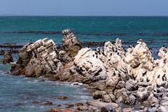 to stay (husiphoto) Tags: meer sea wasser water fels rock landschaft landscape beach strand vögel birds nikon d7100 südafrika southafrica