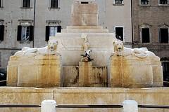 the fountain........... (atsjebosma) Tags: fountain fontein lions leeuwen birds duiven dove statue beeld atsjebosma jesi marche italy water 2018 building gebouw ramen windows