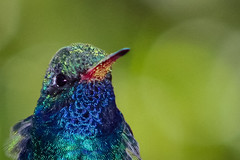 Hummingbird (sgnelson2) Tags: bird hummingbird desert arizona tucson