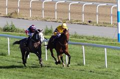 Race horses (My Best Images) Tags: brotävling hästsport fullblod thoroughbred horse race bro galopp gallop racing jockey fav20