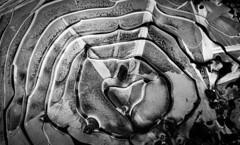 frozen heart (A.K. 90) Tags: blackandwhite sonyalpha6300 e18135mmf3556oss schwarzweis abstract heart art artistic kunst water frozen eis contrast perspektive